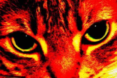 Photograph - My Cat by Larry Ward