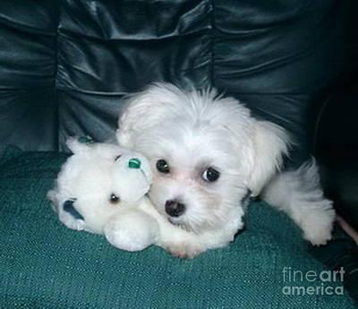 Maltese Puppy Photograph - My Dog Maggie by Joyce Gebauer