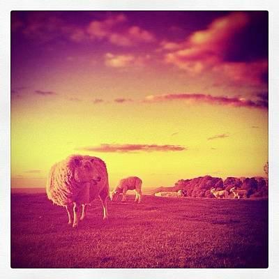 Sheep Photograph - My Edit Of @nicedg Sheep And Lambs Shot by Robert Campbell