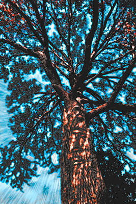 Caravaggio - My Favorite Tree by Kellice Swaggerty