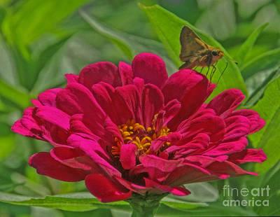 Photograph - My Flower by Elizabeth Winter