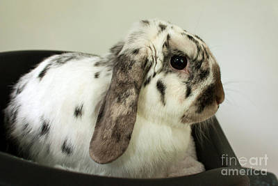 Photograph - My Friend Bunny by Terri Waters