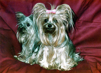 Photograph - My Friends Yorkies by Phyllis Kaltenbach