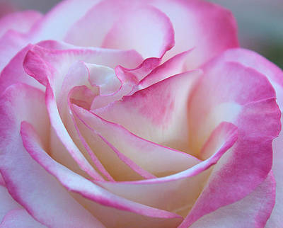 Spectacular Photograph - My Heart In A Rose by The Art Of Marilyn Ridoutt-Greene