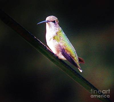 Photograph - My Humming Bird by Judy Via-Wolff
