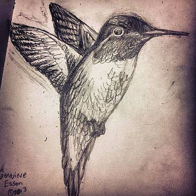 Skylines Wall Art - Photograph - My Hummingbird Drawing by Genevieve Esson