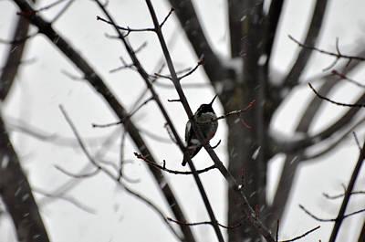Photograph - My Hummingbird Friend by Teri Schuster
