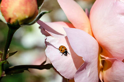 Photograph - My Ladybug Friend by Teri Schuster