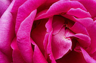 Photograph - My Last Rose by Kenneth Feliciano