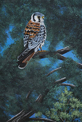 Painting - My Little Kestrel by Jennifer Lake