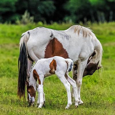 Farm Scene Photograph - My Little Pony by Paul Freidlund