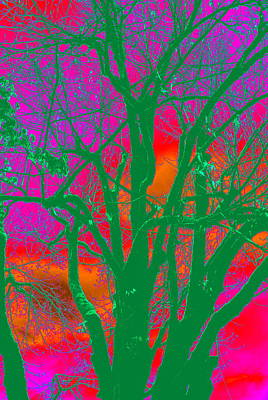 Photograph - My Maple Tree Abstract by Kathy Sampson