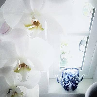 Orchids Photograph - My Mil Has A Double-spouted Teapot On by Johanna Love