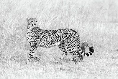 Cheetah Wall Art - Photograph - My Mom And I by Mohammed Alnaser
