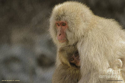 Painting - My Momma Snow Monkey by Robyn Saunders