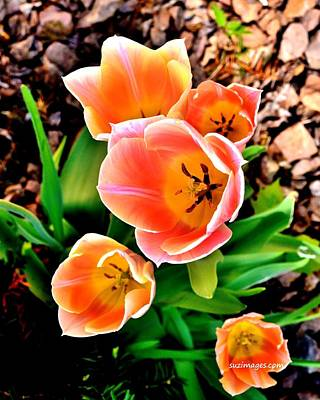 My Mom's Tulips Art Print