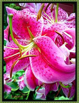 Photograph - Dazzling Lily by Roxy Hurtubise