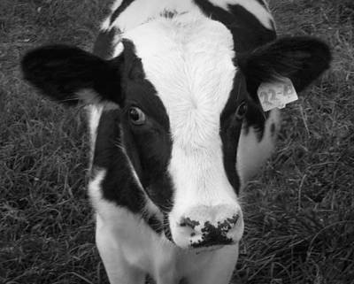 My Name Is Cow - Black And White Art Print by Joseph Skompski