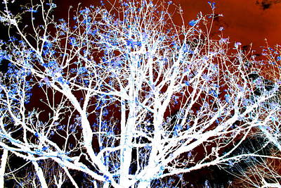 Photograph - My Neighbor's Tree II by Kathy Sampson