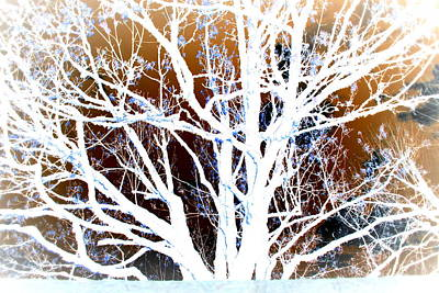 Photograph - My Neighbor's Tree by Kathy Sampson