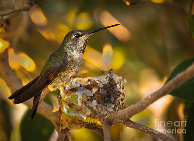 Photograph - My Nest by Robert Bales
