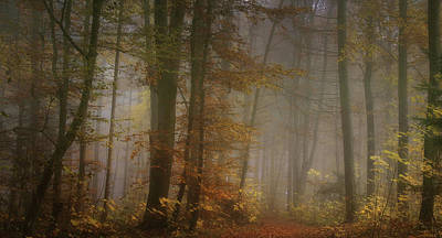 Haze Photograph - My November by Norbert Maier