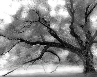 Spot Of Tea Royalty Free Images - My Old Tree Royalty-Free Image by Renee Townsend