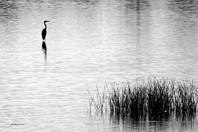 Photograph - My Only Egret by Dick Botkin