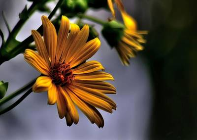 Passions Petals Digital Art - My Only Sunshine by Jeff S PhotoArt