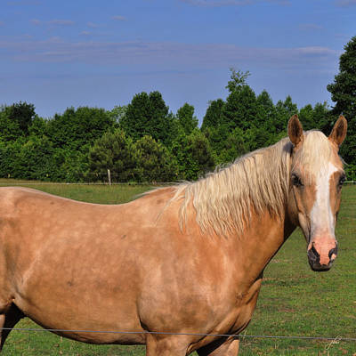 Photograph - My Palomino Buddy by Paulette B Wright