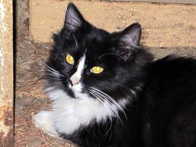 Kittie Photograph - My Pretty Little Pretty Face by Chris Gudger