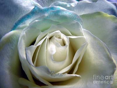 Photograph - My Rainbow Rose by Renee Trenholm