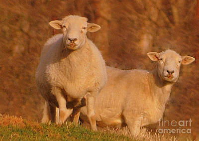 Art Print featuring the photograph My Sheep ...   by Lydia Holly