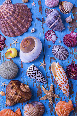 My Shell Collection Art Print by Garry Gay
