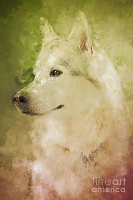 Companion Digital Art - My Siberian Husky by Nancy Hebert