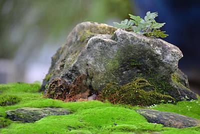 Photograph - My Small Rock Garden by rd Erickson
