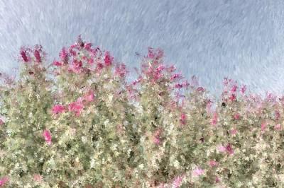 Photograph - My Spring Garden - Impressionism by Heidi Smith