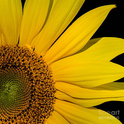 Photograph - My Sunshine by Sonya Lang