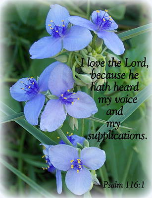 Photograph - My Supplications by Sheri McLeroy