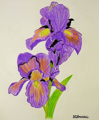 Drawing - My Sweet Iris by Celeste Manning