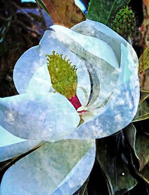 Photograph - My Sweet Magnolia by Ella Kaye Dickey