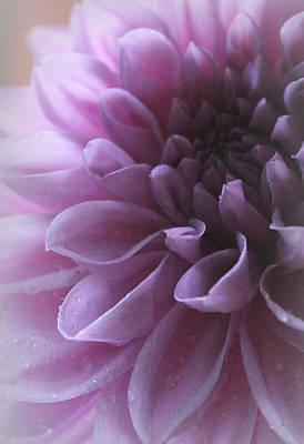 Delicately Photograph - My Sweet Serenade by The Art Of Marilyn Ridoutt-Greene