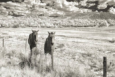 Horse Images Photograph - My Two Friends by Jon Glaser