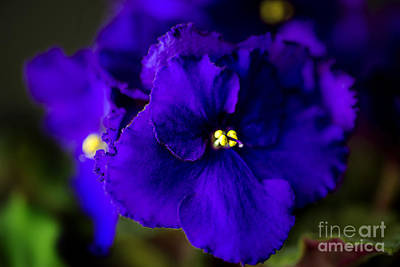 Photograph - My Violet I by Tamyra Ayles