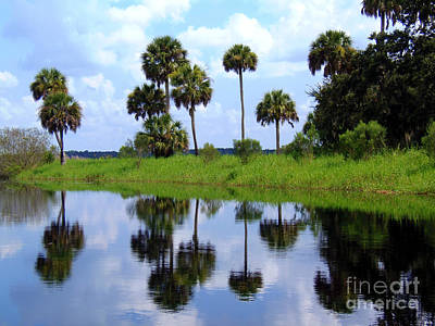 Photograph - Myakka Lake Reflections by Lou Ann Bagnall