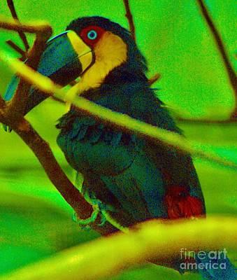 Mynah Bird Art Print by Craig Wood
