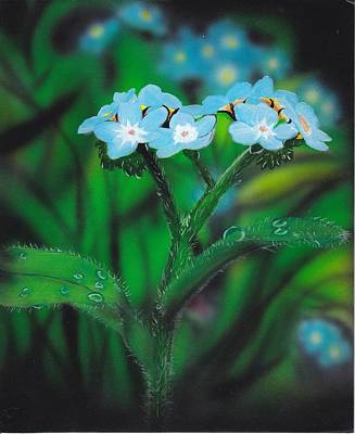 Floral Painting - Myosotis-sylvatica by Christopher Soeters