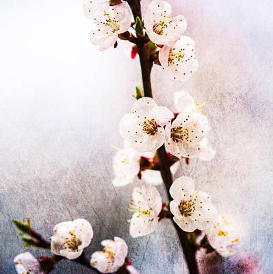Mysteries Of Spring 1 - Square Art Print by Alexander Senin