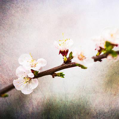 Mysteries Of Spring 4 - Square Art Print by Alexander Senin
