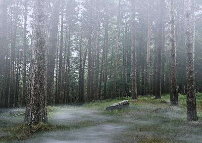 Photograph - Mysterious Foggy Woodland Scene by Jane McIlroy